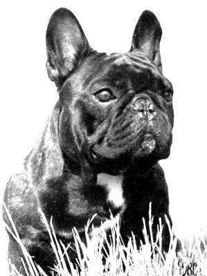 Famous Dogs in Our Pedigrees - LeChateau French Bulldogs Reg