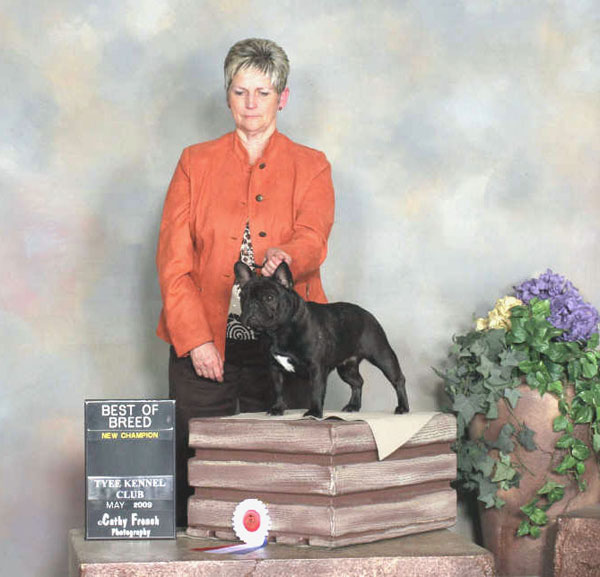 award winning french bulldog - LeChateau's Hot-N-Sassy