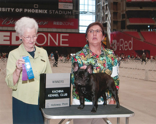 award winning french bulldog - LeChateau's Shania